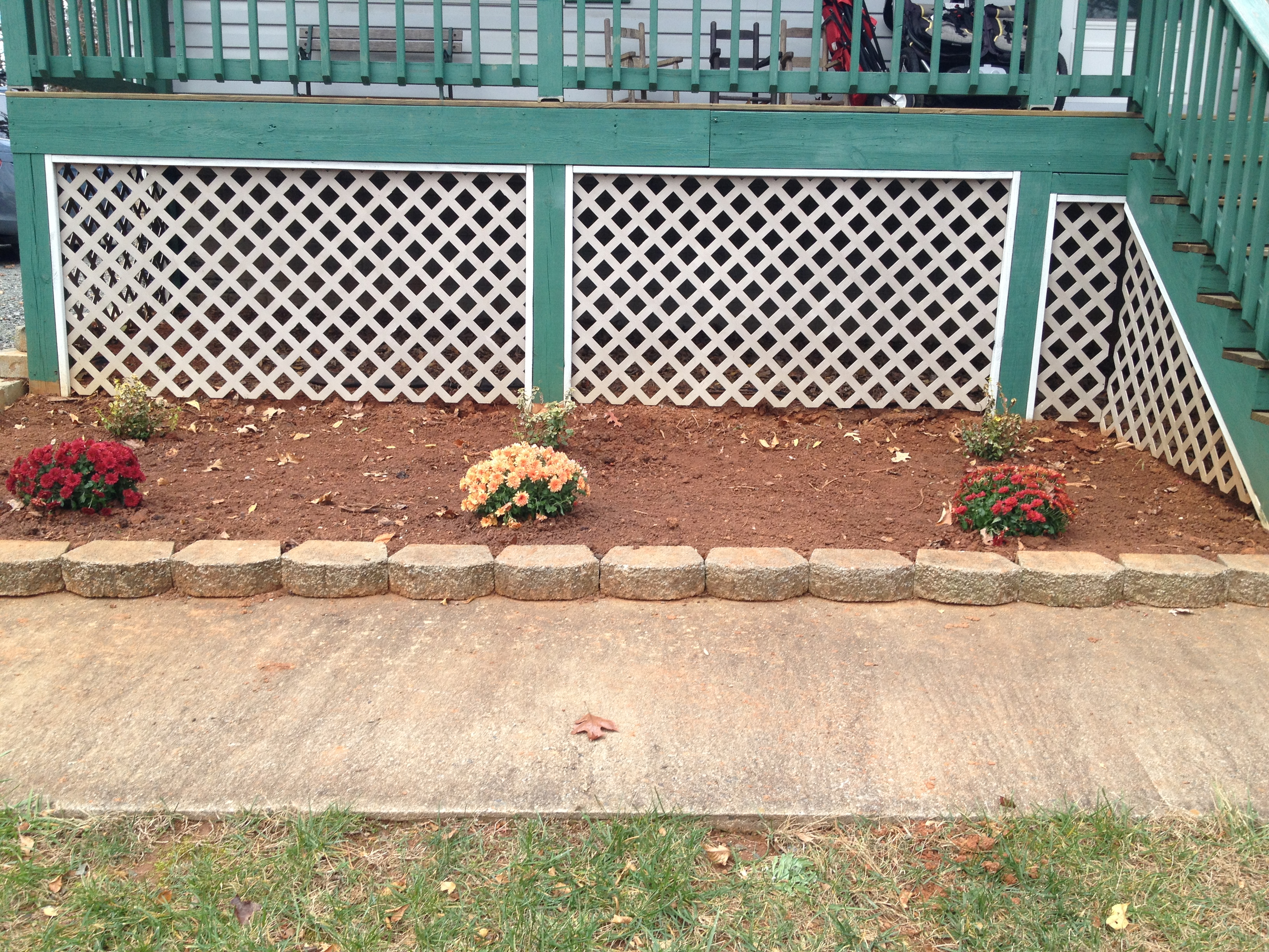 Freshly planted mums and shrubs.