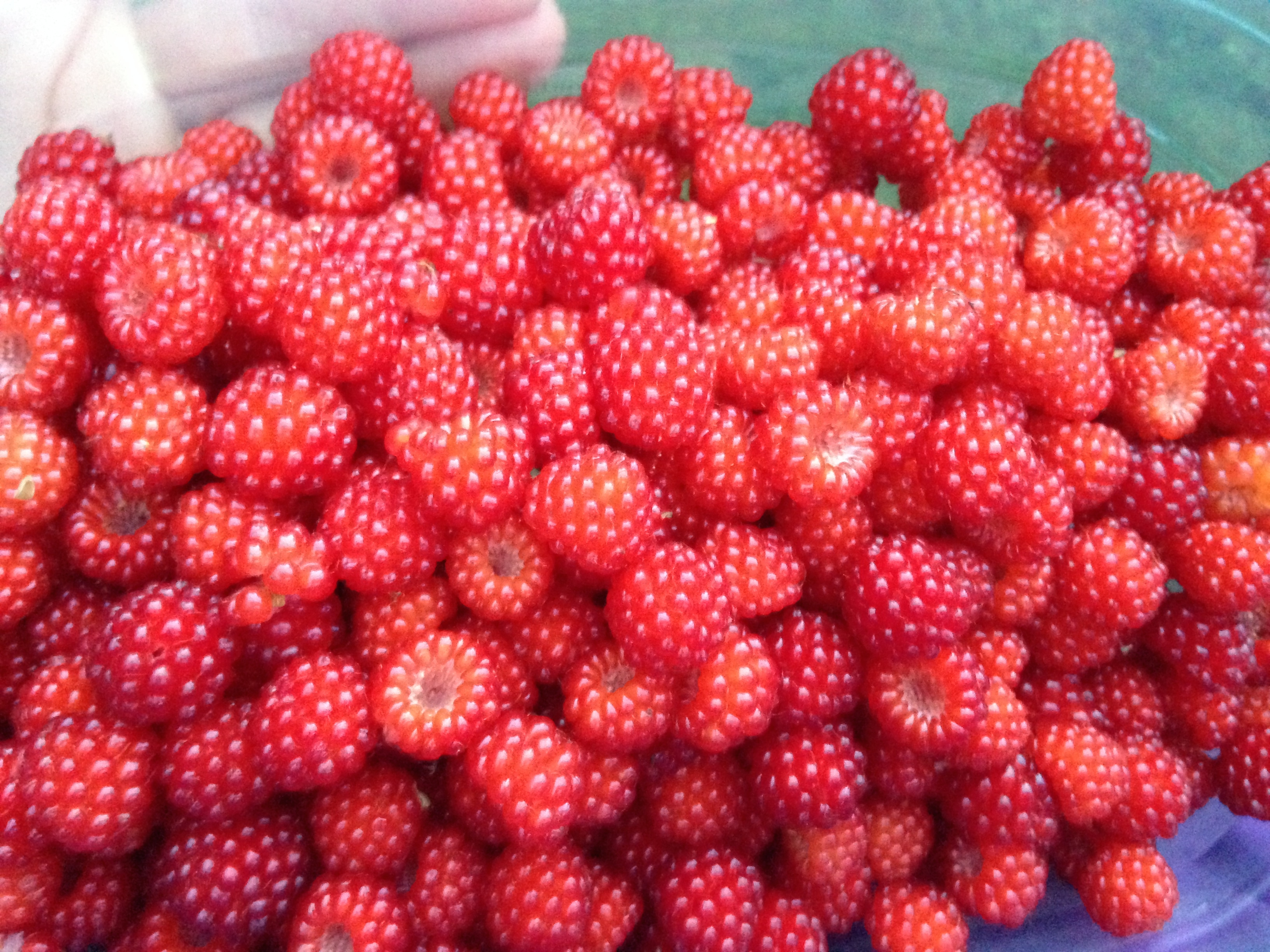 Some of the Yummy berries I picked.